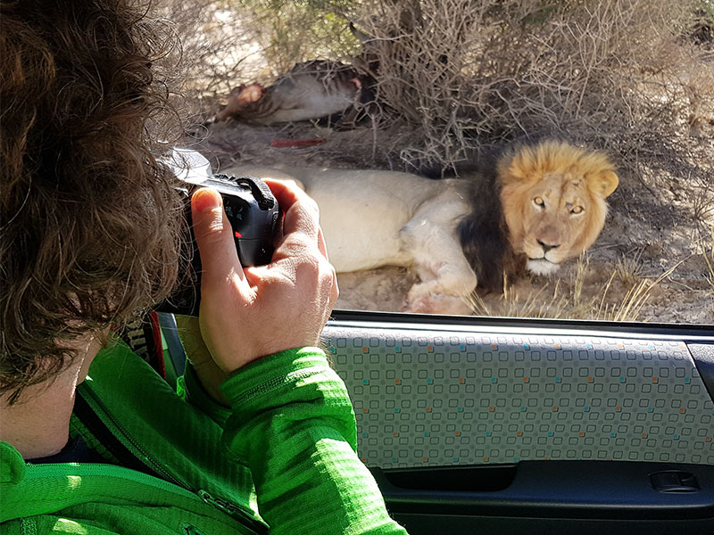 Get up close photos of Lions in the wild on our photography tour