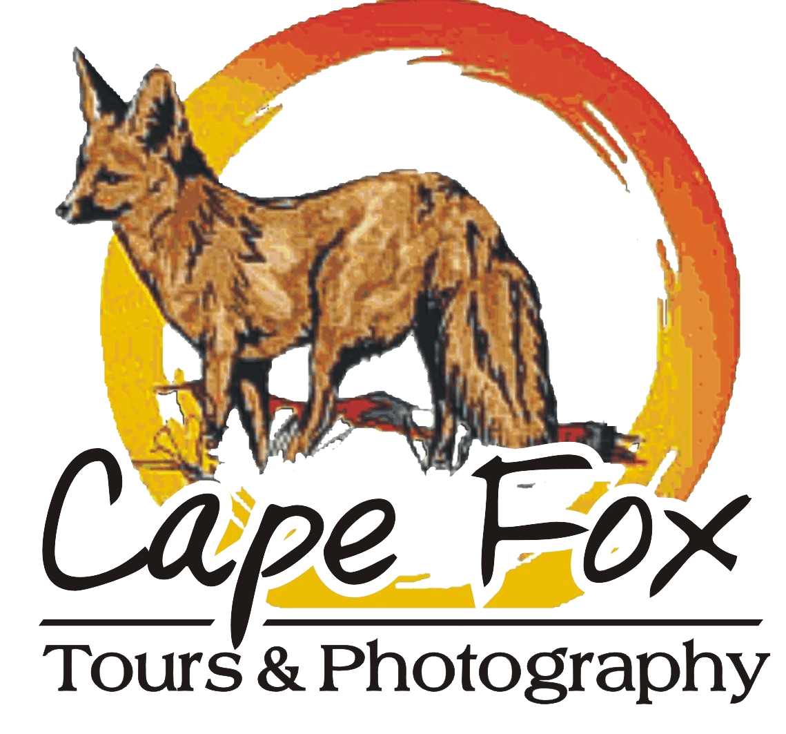 Cape Fox Safari Tours & Photography Logo